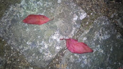 Naturezas Mortas(10) - © Rui Lima - PARTE 1