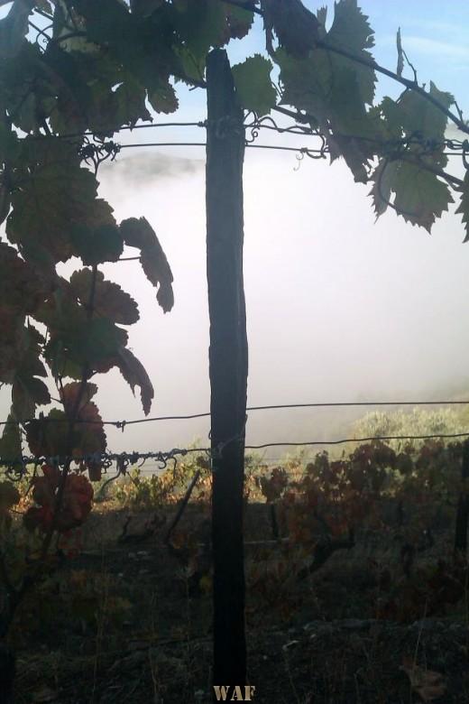 Vines with sense