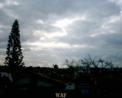 Pinheiros, céu e a cidade