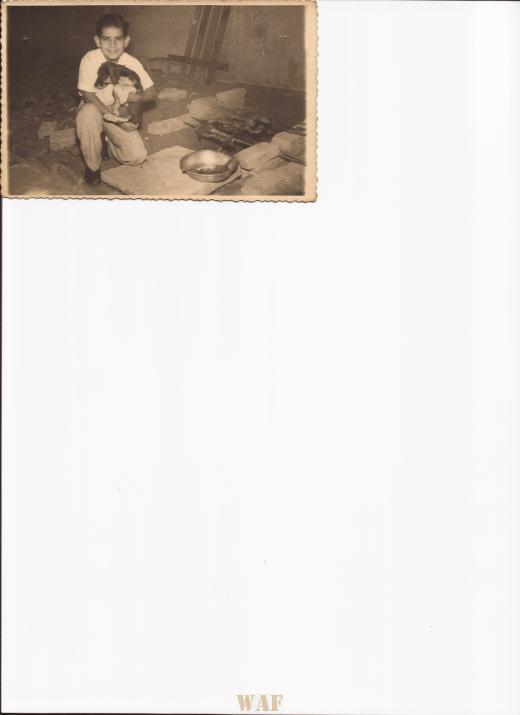 MARNE QUANDO GURI / Gato coty e cachorrinho Rex