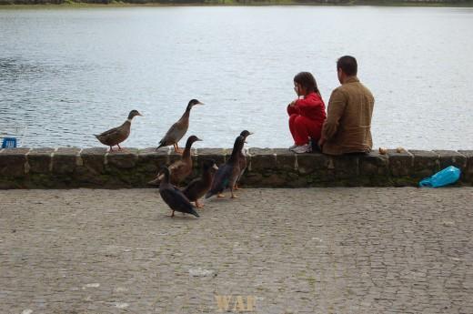 """""""a menina, o pai e os patos"""""""