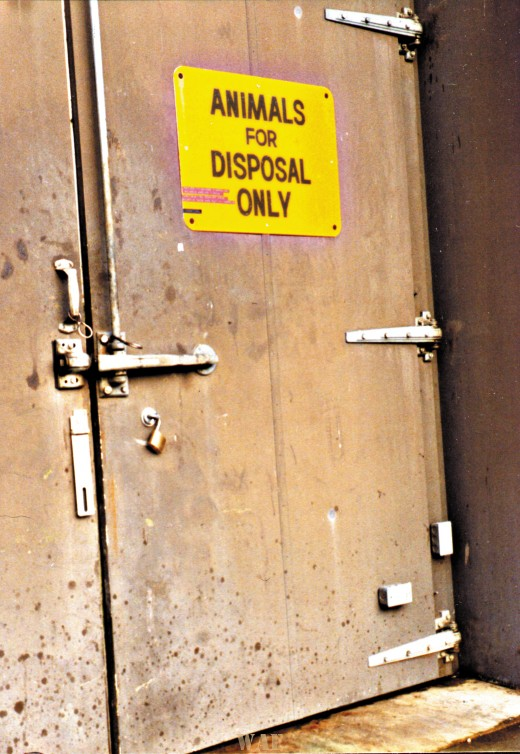 Animals for Disposal Only