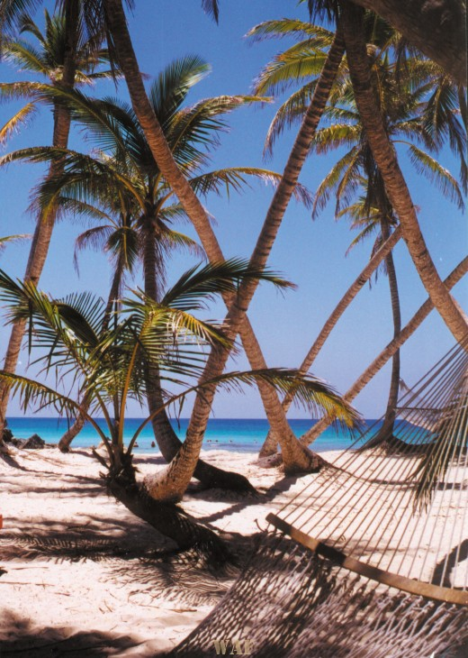 Trees off the beach on Paradise Island