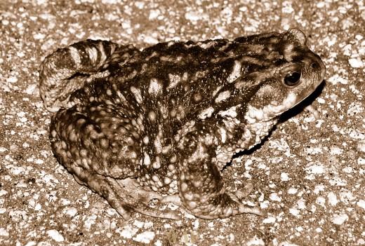 Camuflagem nocturna