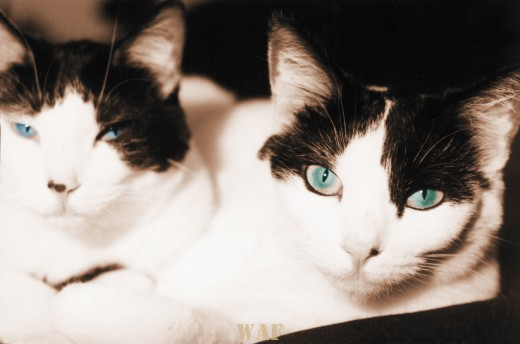 Kaiser and Sose (two cats in Denver, Colorado)