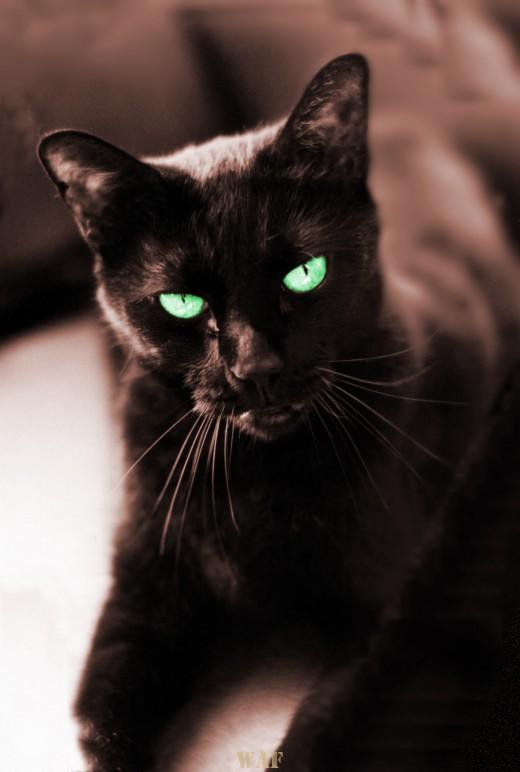Katie (the black cat)