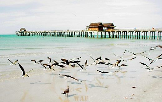 birds in flight at Naples Pier (Naples, FL December 2004)