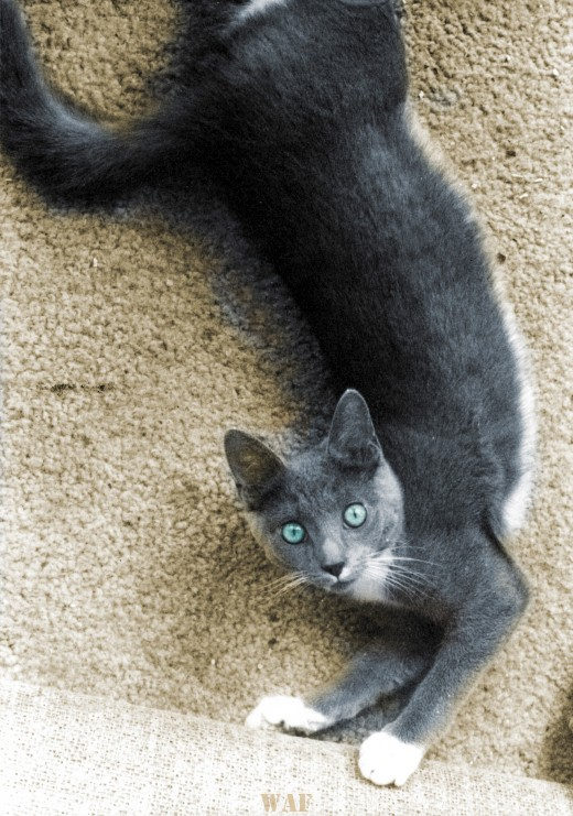Sequoia Stretching (on carpet on a Belden Ave. porch in Logan Square, Chicago)