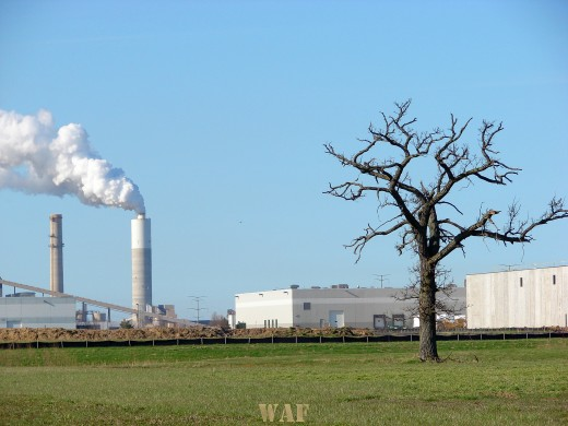 a Smoke Stack and a dead tree in Wisconsin